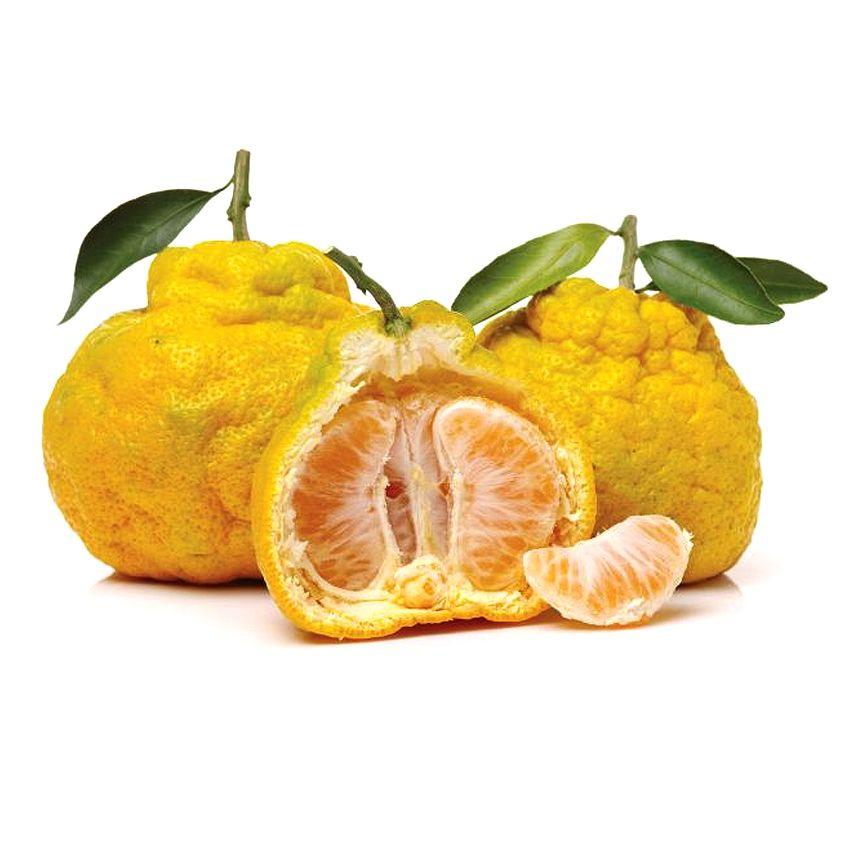 Ugly - Zioła cięte, warzywa, grzyby, owoce egzotyczne i przyprawy Freshmint Łódź