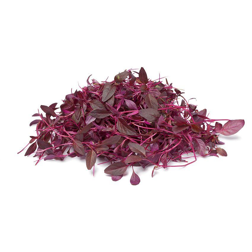 Amarantus - Zioła cięte, warzywa, grzyby, owoce egzotyczne i przyprawy Freshmint Łódź
