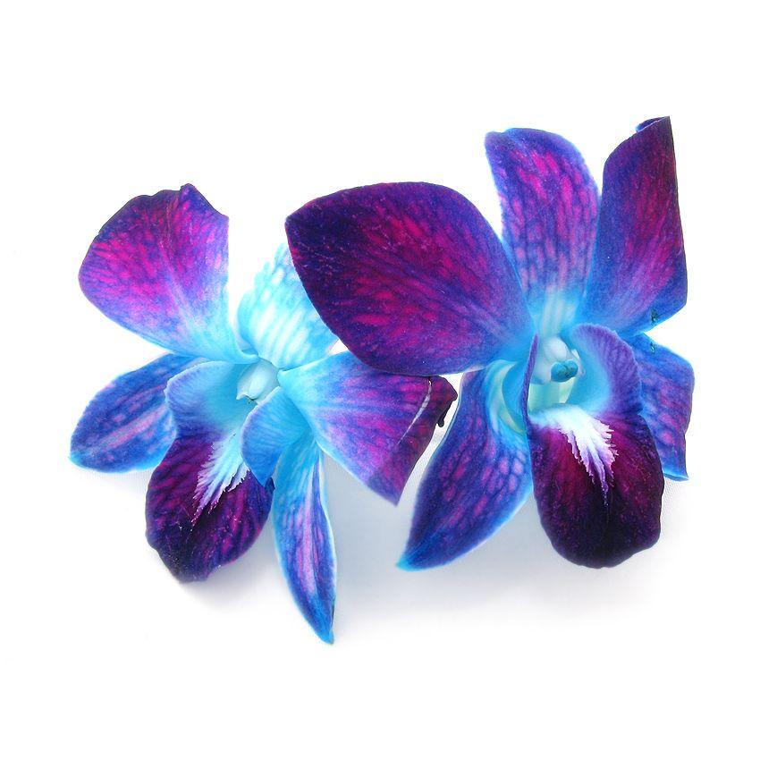 Storczyk galaxy blue - Zioła cięte, warzywa, grzyby, owoce egzotyczne i przyprawy Freshmint Łódź