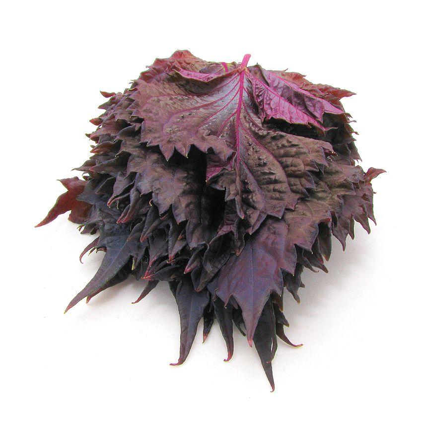 Shiso czerwone - Zioła cięte, warzywa, grzyby, owoce egzotyczne i przyprawy Freshmint Łódź