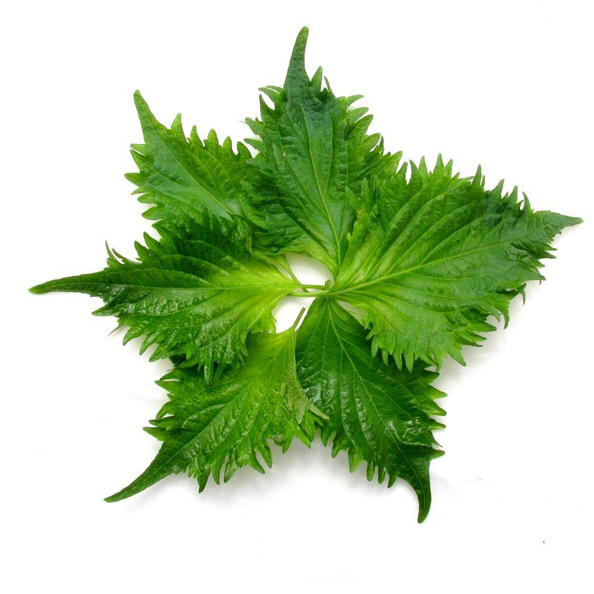Shiso zielone - Zioła cięte, warzywa, grzyby, owoce egzotyczne i przyprawy Freshmint Łódź