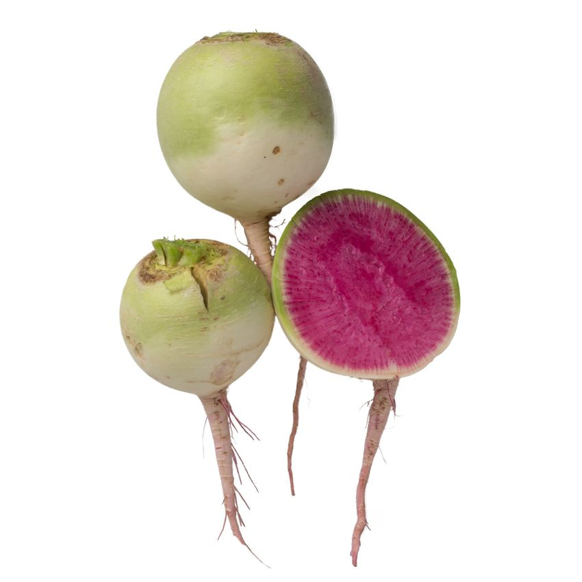 Rzepa arbuzowa - Zioła cięte, warzywa, grzyby, owoce egzotyczne i przyprawy Freshmint Łódź