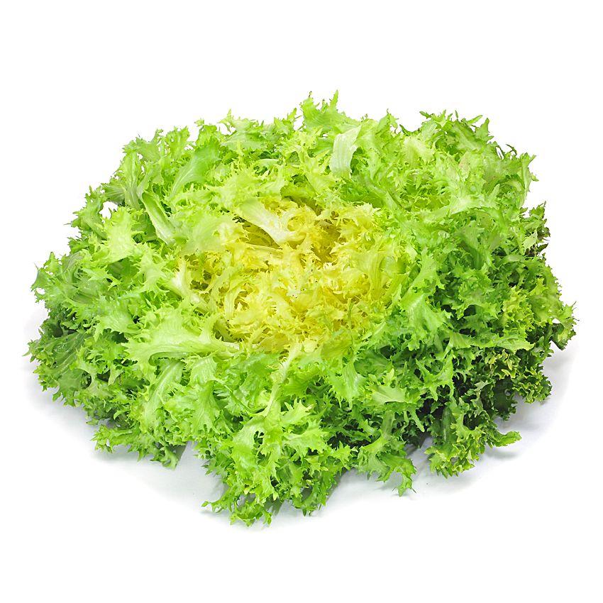 Sałata frisee - Zioła cięte, warzywa, grzyby, owoce egzotyczne i przyprawy Freshmint Łódź